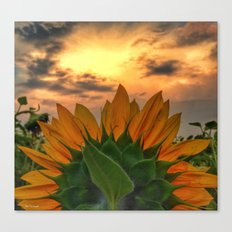 sunflower in the sunset Canvas Print