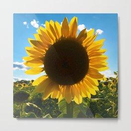A Summer Sunflower Metal Print