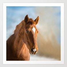 Brown Horse Winter Sky Art Print
