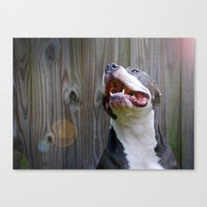 Pit-iful Smile Canvas Print
