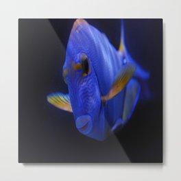 Blue Tang 2 Metal Print