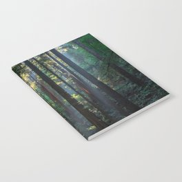 Red Woods & Sun Rays Notebook