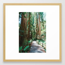 The Redwoods Framed Art Print
