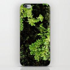 Textures - Moss iPhone & iPod Skin