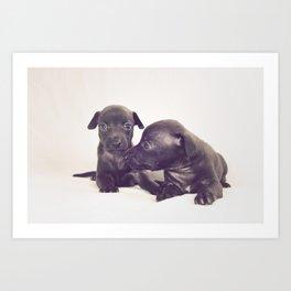 little dog II Art Print