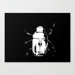 scarabée exposed Canvas Print