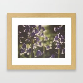 Bluebells. Framed Art Print