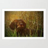 daschund Art Prints featuring Evening Photo Shoot by Dorothy Pinder