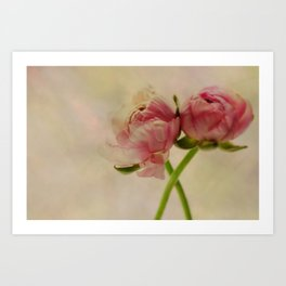 Falling in Love with rose flowers Art Print