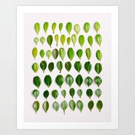 ombre leaves Art Print