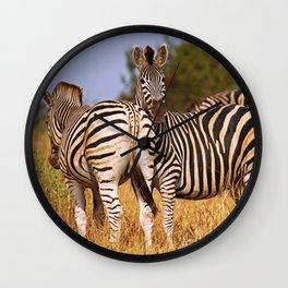 Zebras wildlife in Africa Wall Clock