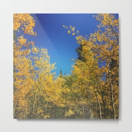 Fall Aspens Metal Print