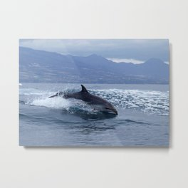 Wild and free bottlenose dolphin Metal Print