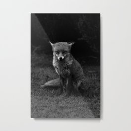 Fox In Black And White Metal Print