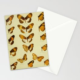 Vintage Butterfly Print - African Mimetic Butterflies (1910) - Bematistes Macarista & Mimics Stationery Cards