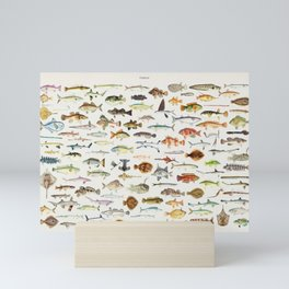 Illustrated Colorful Southern Pacific Exotic Game Fish Identification Chart Mini Art Print
