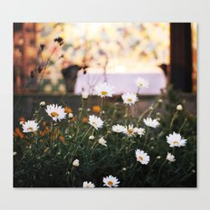 Everything's coming up daisies Canvas Print