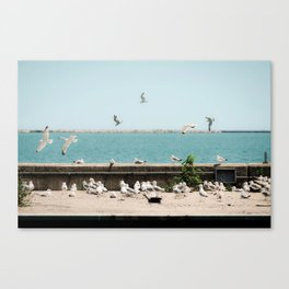 Lakefront Gulls Canvas Print