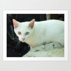 Blue And Green Eyed Cat Art Print