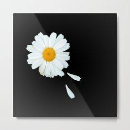 Love Me - Love Me Not - White Daisy on Black Background #decor #society6 #buyart Metal Print