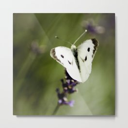 Butterfly Dream 2 (Square) Metal Print