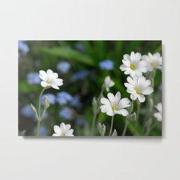 Flowers Izby Garden 7 Metal Print