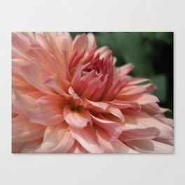 Dahlia named Preference Canvas Print