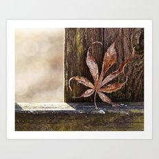 a leaf and bokeh Art Print