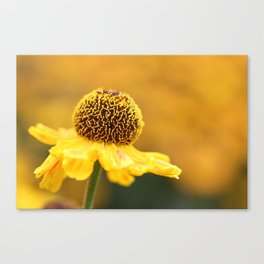 The Golden Hours Canvas Print