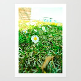Daisies in Clinch Park - Traverse City, Michigan Art Print