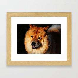 Do Not Disturb. Prince. Chow Chow Dog Framed Art Print