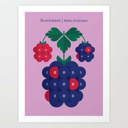 Fruit: Blackberry Art Print
