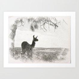 Llama 'Geronimo' Art Print