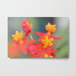 Succulent Red and Yellow Flower Metal Print