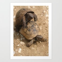 Slow Love - Tortoises Art Print