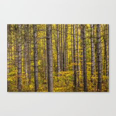 Fall Colors among Pine Trees Canvas Print