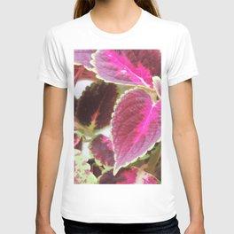 Coleus plants #3 T-shirt