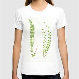 Edward Joseph Lowe - Asplenium Monanthemum T-shirt