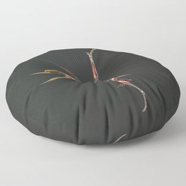 Dsungaripterus Weii Muscle Study (No Labels) Floor Pillow