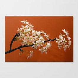Spring bloom -2 Canvas Print