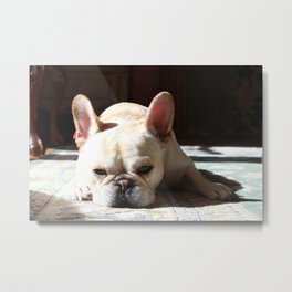 A Calm Day for a Dog Metal Print