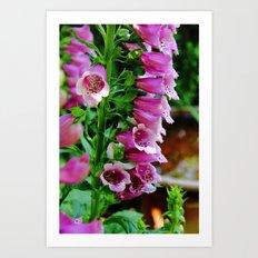 Foxglove Delight Art Print