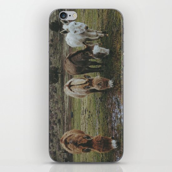 Miniature Donkeys iPhone & iPod Skin