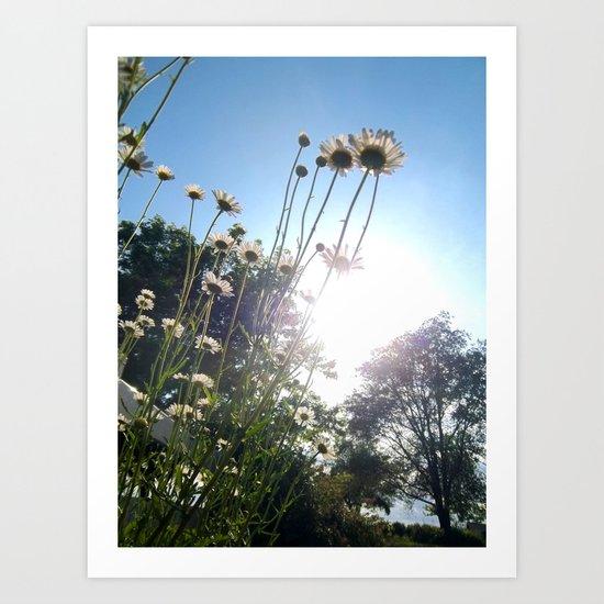 Bright Daisy Garden 4 Art Print