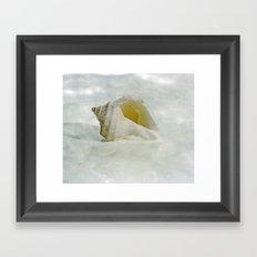 White Seashell Framed Art Print