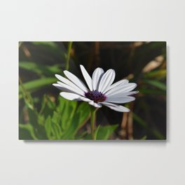 Sun Kissed Flower  Metal Print