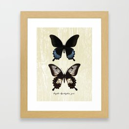 Butterfly10_Papilio Ascalaphus pair Framed Art Print