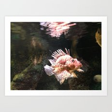 fish love Art Print