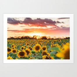 Sunflower Sunsets Art Print