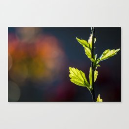 Leaves in a colorful world Canvas Print